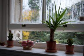 fenêtre ouverte avec plantes et saladier de pommes sur le rebord
