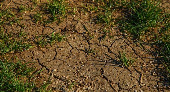 terrain avec de la terre et de l'herbe